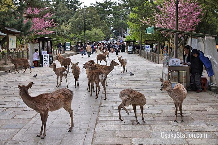 Nara Park (Nara-koen)