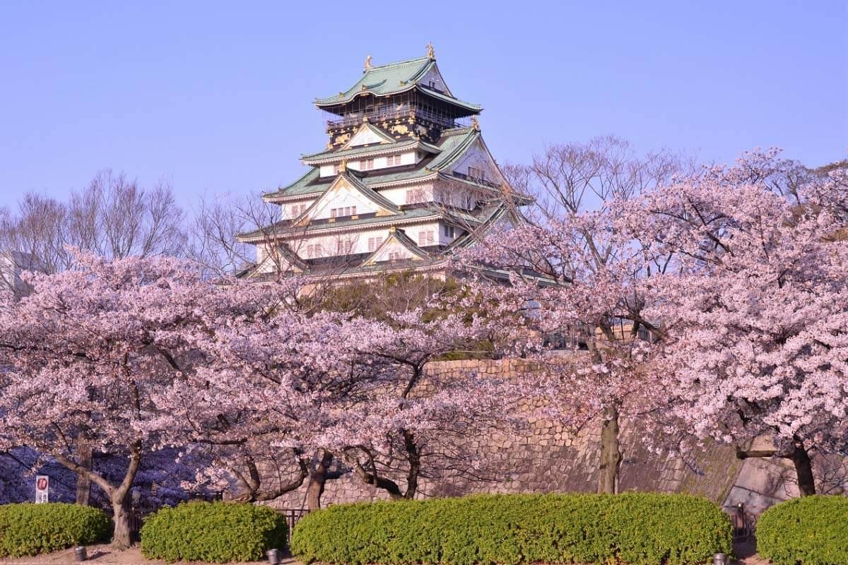 Traveling ke Jepang 7 Hari