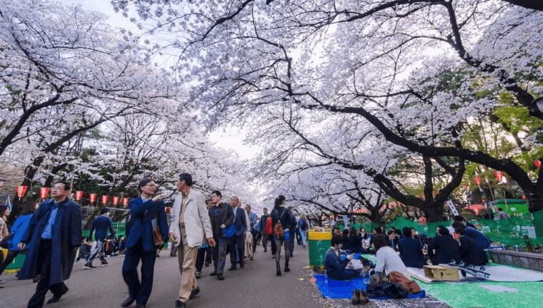 Travel ke Jepang 6 hari
