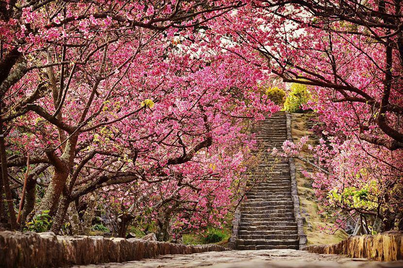 Paket Liburan ke Jepang April