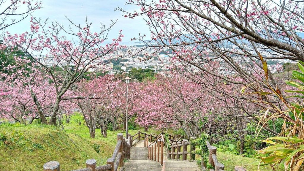 Paket Liburan ke Jepang Mei