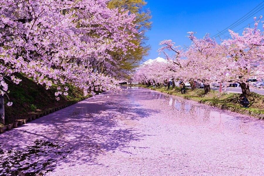 Paket Wisata ke Jepang April