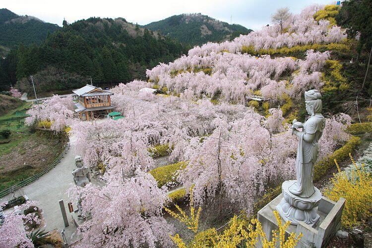 Paket Wisata ke Jepang Maret 2021