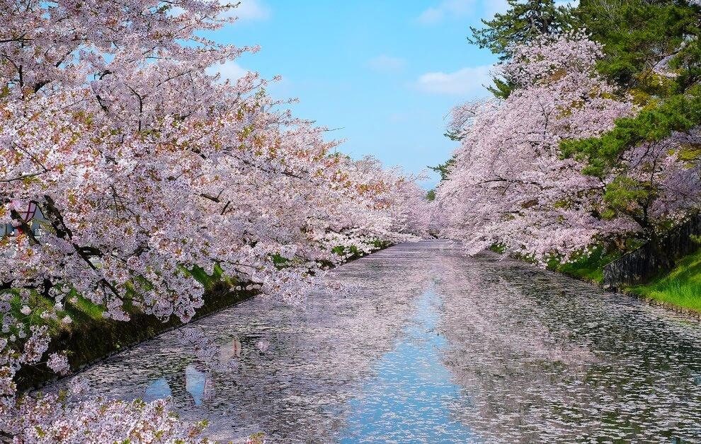 Paket Wisata ke Jepang Mei
